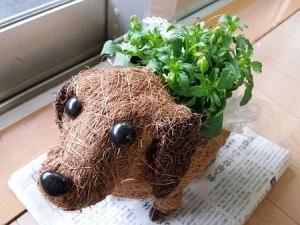 ワンちゃんの鉢植え